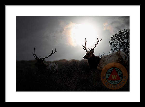 animal, animals, antler, antlers, art, bay area, bayarea, buy, california, canvas print, deer, deers, elk, elks, fine art, for sale, framed print, greeting card, home decor, horn, horns, mammal, mammals, metal print, mist, morning, nature, photograph, photography, point reyes, poster, posters, print, prints, pt reyes, ptreyes, purchase, sell, silhouette, spring, summer, sun, sun rise, sunrise, tomales bay, tule elk, tule elks, wall art, wall decor, wildlife, wing tong, wingsdomain
