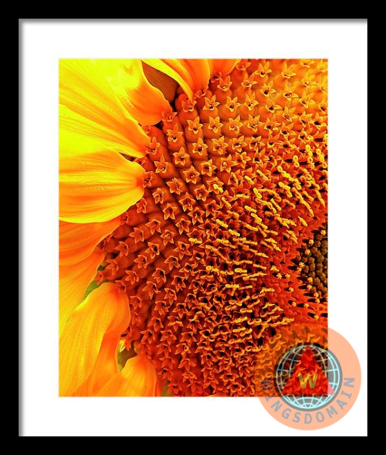 about wingsdomain, art, bright, buy, canvas print, cheearful, color, colorful, fine art, flora, floral, flower, flowers, for sale, framed print, greeting card, happy, home decor, macro, metal print, nature, petal, photograph, photography, plant, plants, poster, posters, print, prints, purchase, sell, spring, summer, sun, sun flower, sun flowers, sunflower, sunflowers, van gogh, vibrant, wall art, wall decor, wing tong, wings domain, wingsdomain, yellow