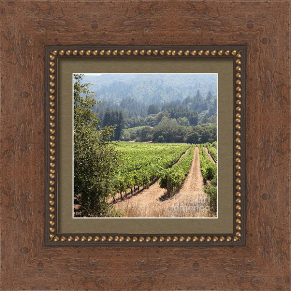 wingsdomain-5d24515-vineyard-framed[1]